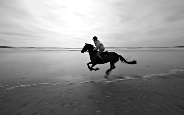 Sunday Gallop by Goggz