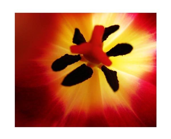 Tulip Brust by Lois96