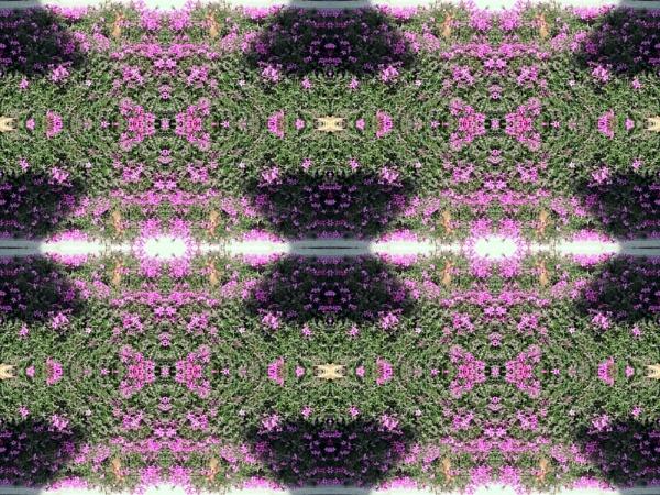 phlox by dawnmichelle