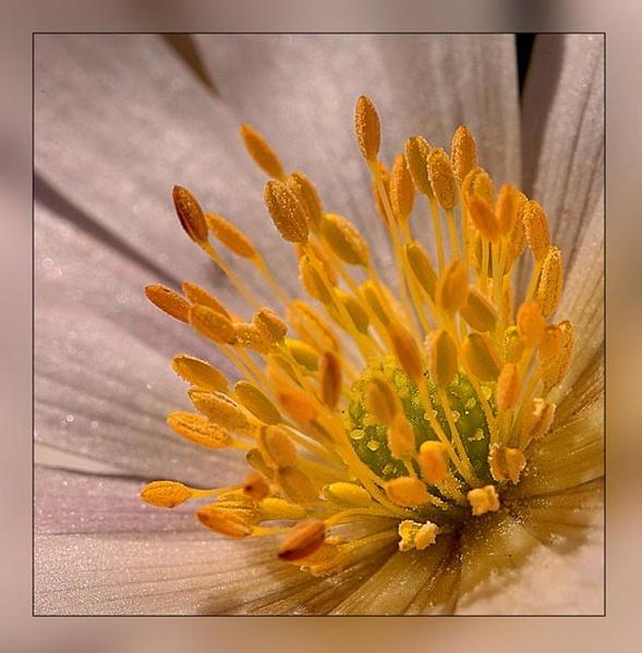 Anemone study by clo99