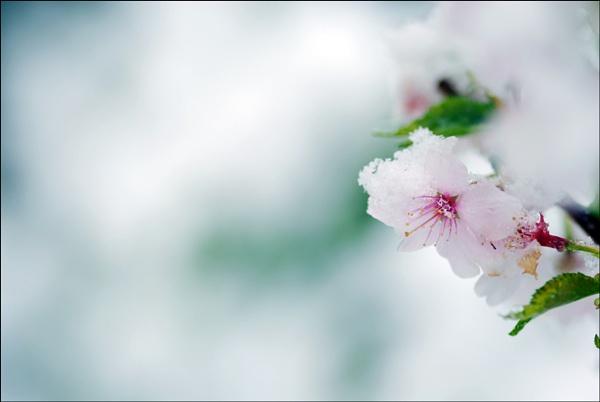 Spring Snow by Strobe
