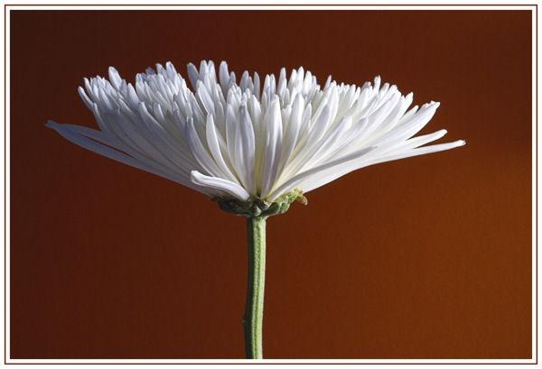singular stem by andyatkins