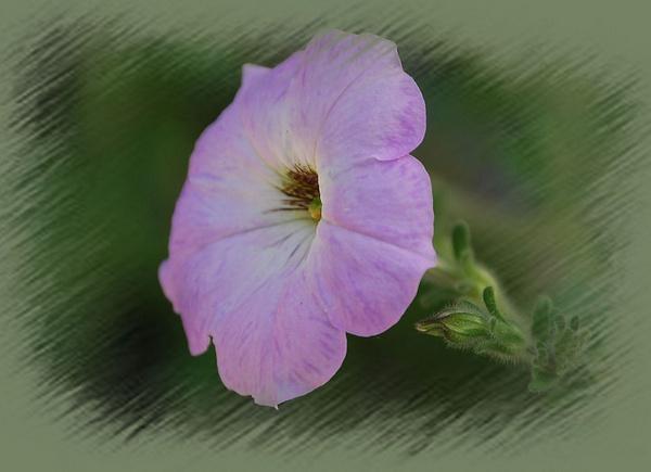 Purple flower by Lindaephotozine