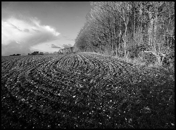 Ploughed, Mono by dandeakin