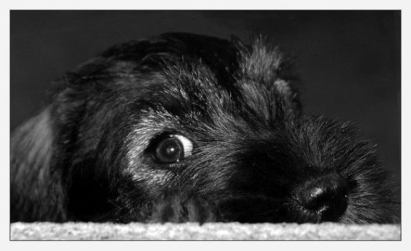 Peek-a-boo... by Ukulele_Lady