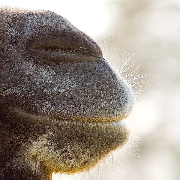 Sleepy Sloth by tigertimb
