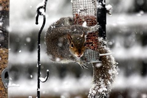 snowy breakfast by johnlwadd
