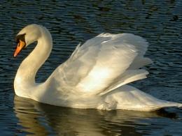 Swan yeahhh here it is