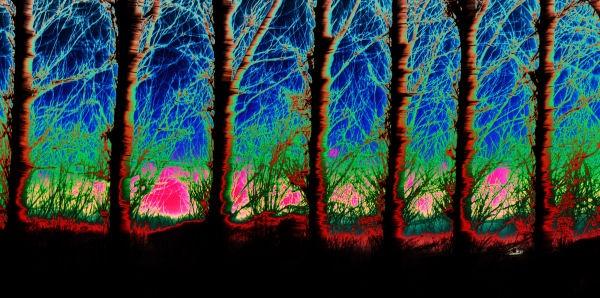 Psychadelic Trees by crabbo_1