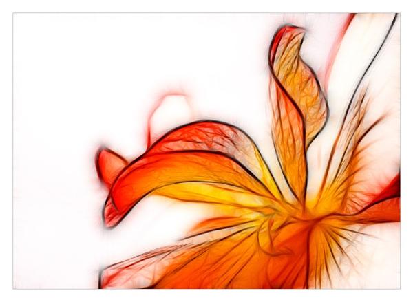 Begonia by katieb