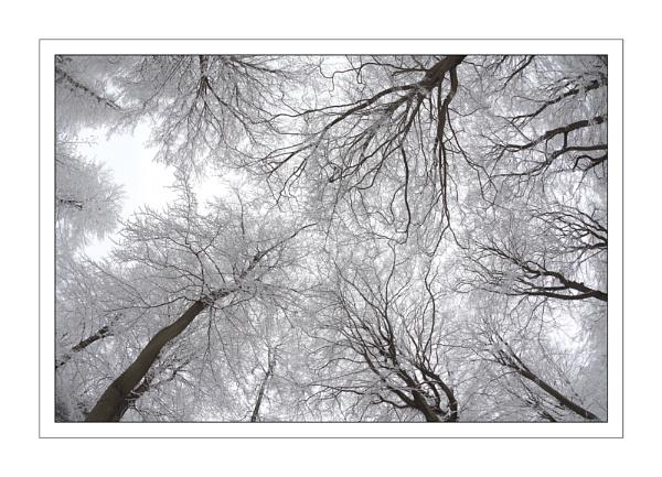 Snowy Canopy... by ejtumman