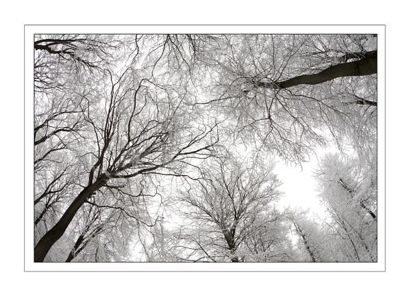 Snowy Canopy II... by ejtumman