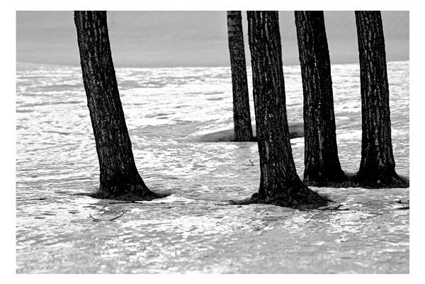 Trunks by A_Harrison