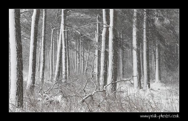 Blacka Moor Blizzard by richardwheel