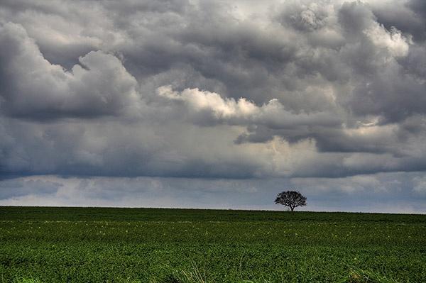 Lone Tree by wbk666