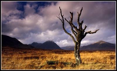 Tree on rannoch by PeeCee