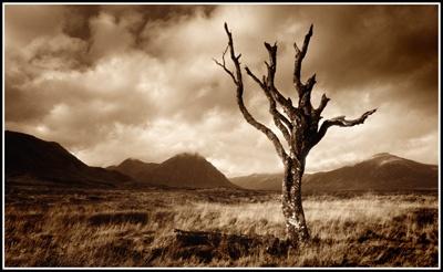 tree on rannoch 2 by PeeCee