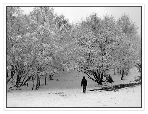 Winter wonderland by JuliaGavin