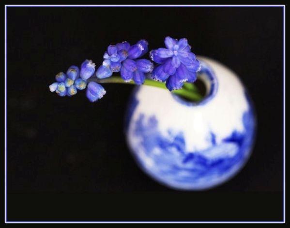 Muscari Blue by ChristineD