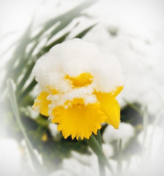 Easter Bonnet by baldsparky