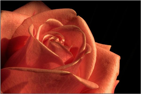 Sub rosa II by Mirjam