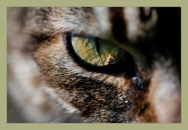 Cats Eye by tavm