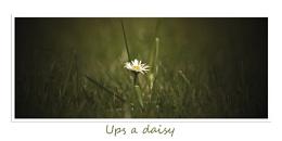 ups a daisy