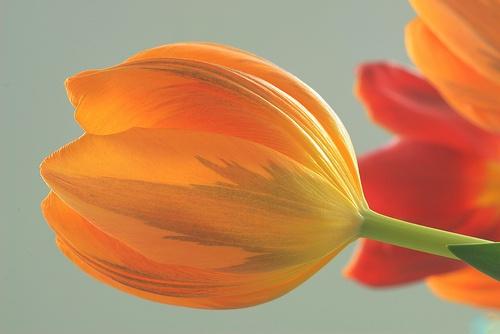 flower power by hamperium