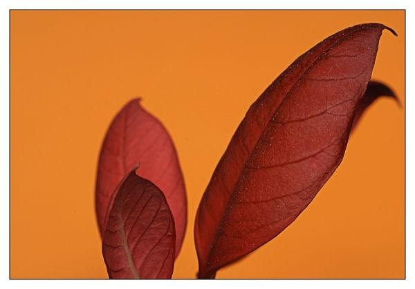 Wot a lot of orange! by andyatkins