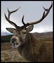 Deer 5 by UBOAT