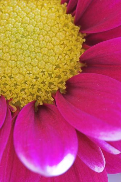 Flower by ZakBlack