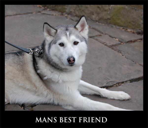 mans best friend by ducatifogarty