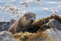 Otter 2