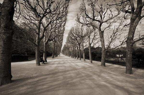 Jardin des Plantes by alansnap