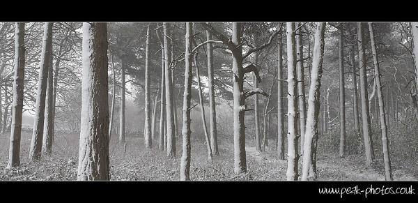 Blacka Moor Whiteout by richardwheel