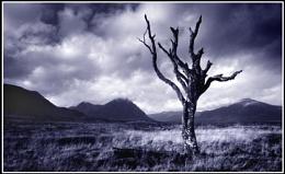 tree on rannoch 3