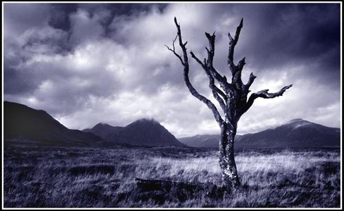tree on rannoch 3 by PeeCee