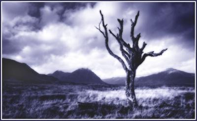 tree on rannoch 4 by PeeCee