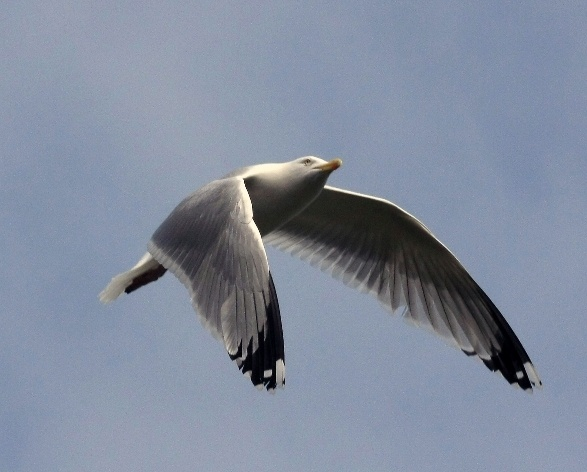 Gull Four by ChristineD