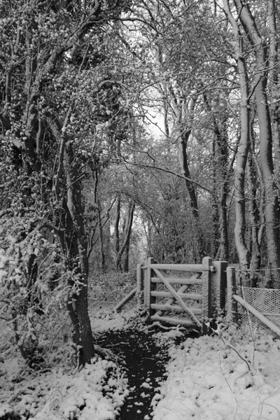 The gate that leads to.. by oldbiddy