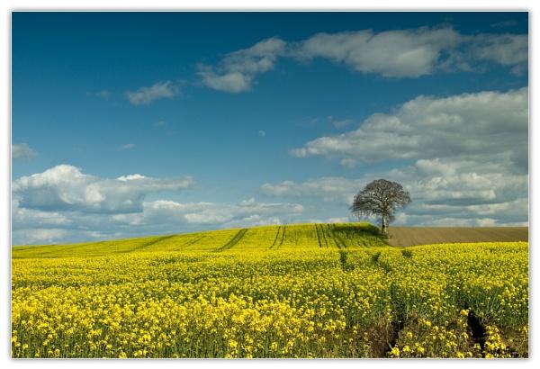 Carlow Spring by Ganto