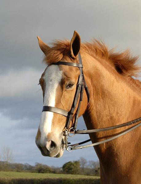 stevens horse by Libby_M
