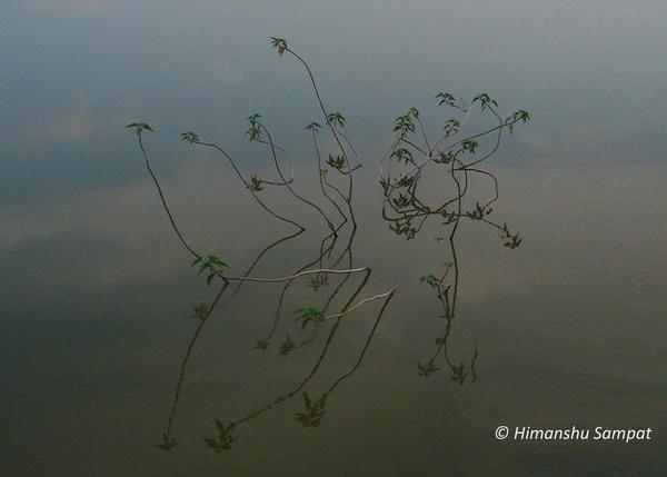 Water Lilies by 2himanshu