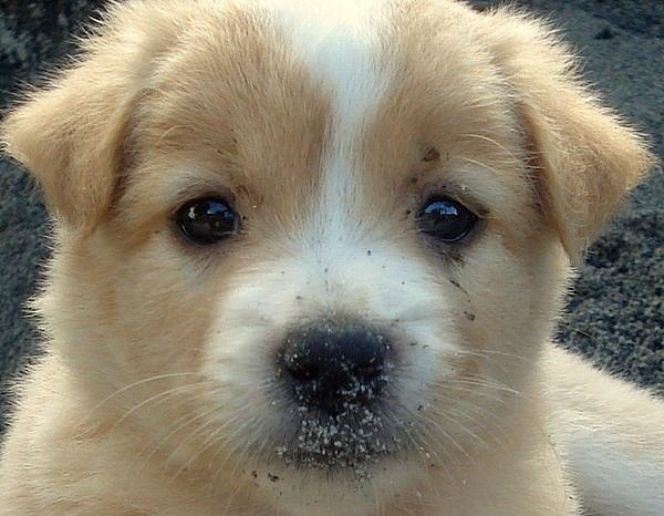 Lassie by photophantom