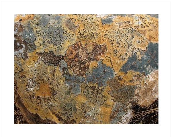 torridon, globe of lichens by paulmackiemaging