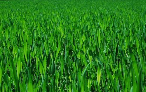 Green by mrcran