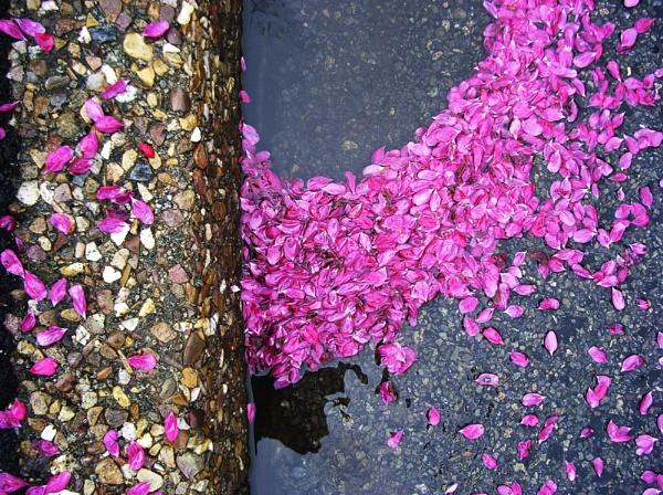 Blossom by Djemde