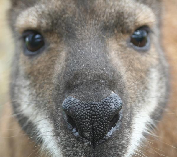 He nose... by SteveAngel