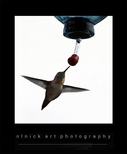 hummingbird by beriah