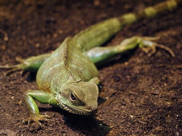 Lizard by crashby